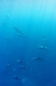 Dolphin Strata from Transluminous Press